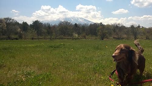 富士山とマロちゃん
