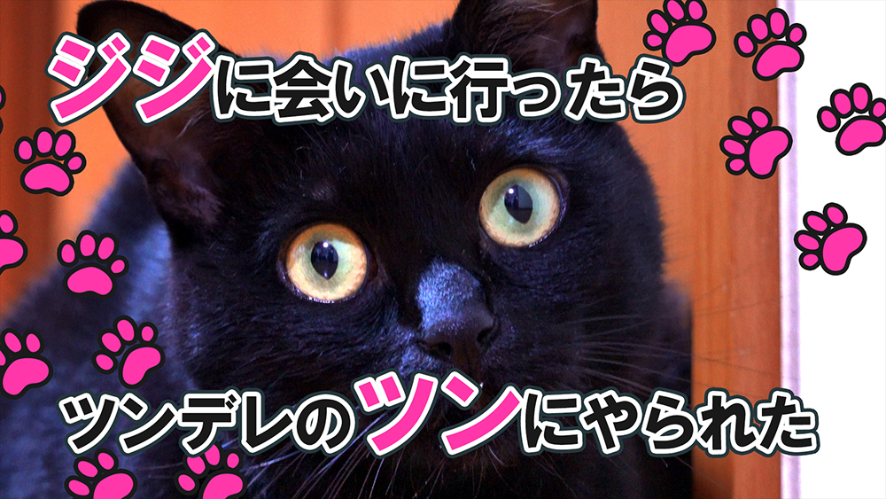 黒猫のジジに会いに行ったらツンデレのツンにやられた - 車中雑談Vlog